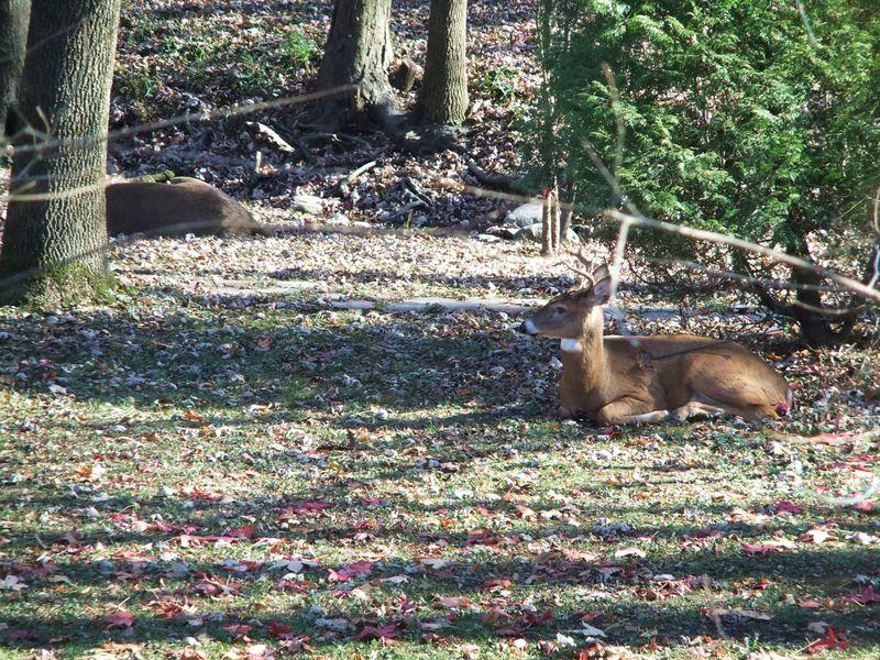 Deerarrow3
