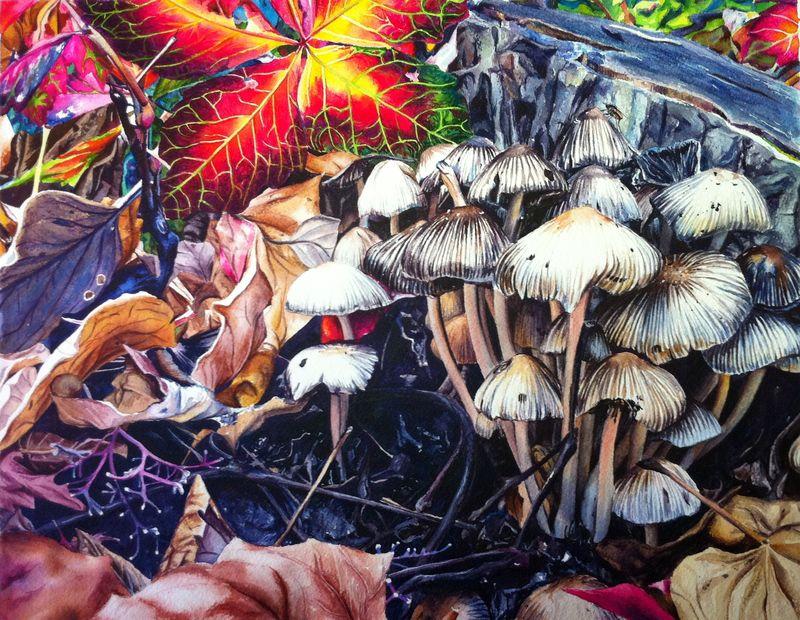Watercolor Paintings - Mushrooms